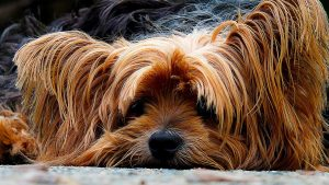 8 non-toxic and natural ways to keep your dog free of fleas and ticks