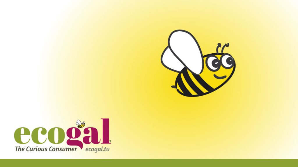 The story of ecogal's bee